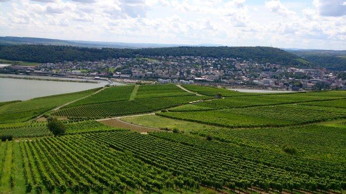 Blick über Weinreben und über den Rhein in Rüdesheim, nach Bingen
