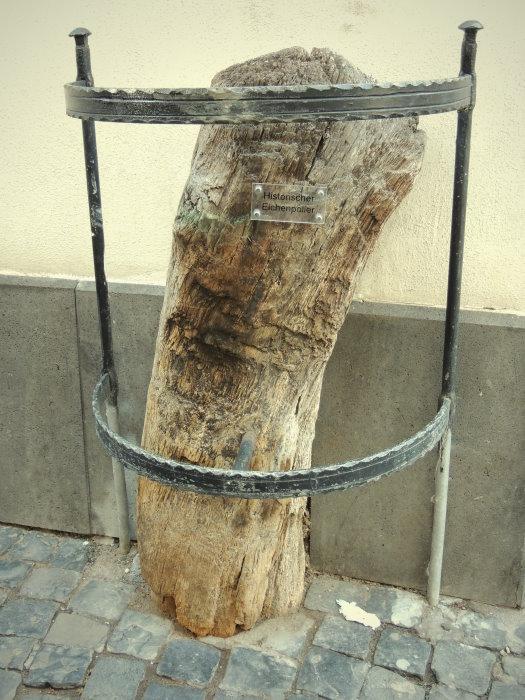 verbliebener Rest eines Kirschbaumes